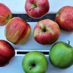 Déshydrateur alimentaire : comment choisir ?